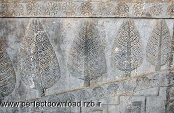 درخت سرو در تخت جمشید نماد چیست؟